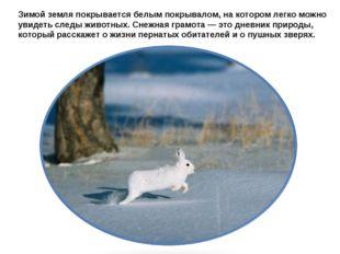 Зимой земля покрывается белым покрывалом, на котором легко можно увидеть след