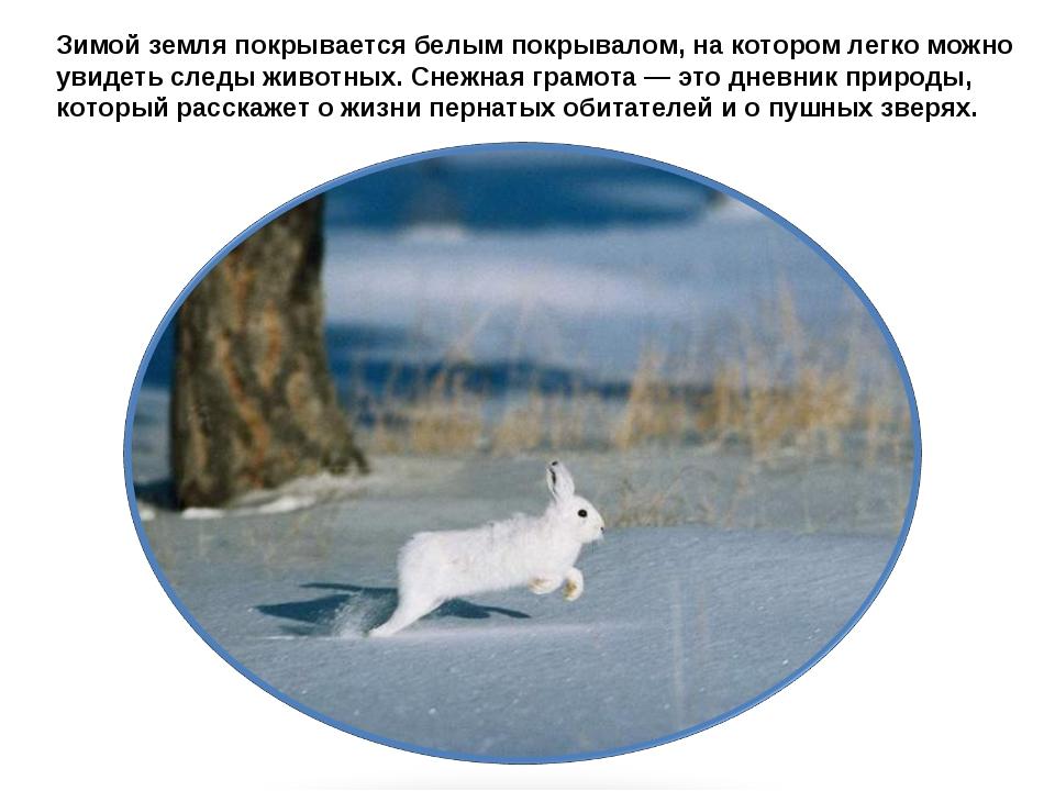 Зимой земля покрывается белым покрывалом, на котором легко можно увидеть след...