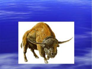 первобытный бизон