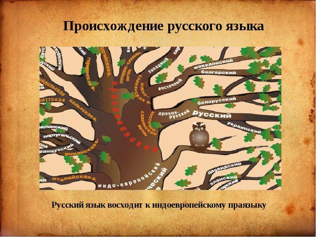 Происхождение русского языка Русский язык восходит к индоевропейскому праязыку