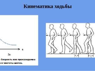 Кинематика ходьбы