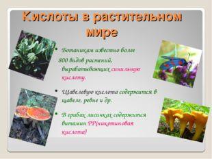 Кислоты в растительном мире Ботаникам известно более 800 видов растений, выра