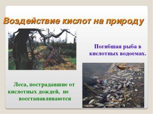 Леса, пострадавшие от кислотных дождей, не восстанавливаются Погибшая рыба в
