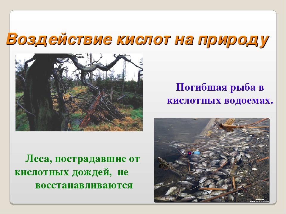 Леса, пострадавшие от кислотных дождей, не восстанавливаются Погибшая рыба в...