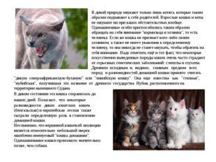В дикой природе мяукают только лишь котята, которые таким образом подзывают к