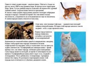 Один из самых редких видов – андская кошка. Обитает в Андах на высоте около 3