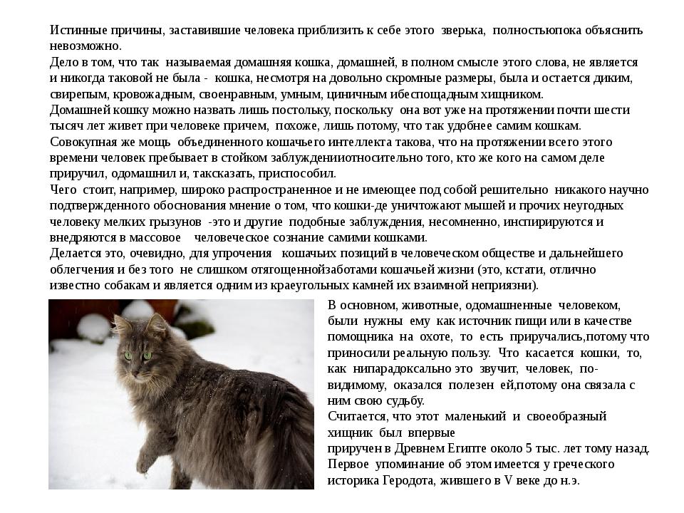 Истинные причины, заставившие человека приблизить к себе этого зверька, полно...
