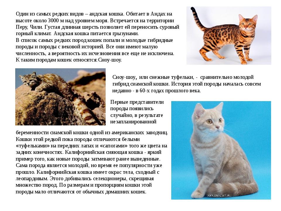 Один из самых редких видов – андская кошка. Обитает в Андах на высоте около 3...