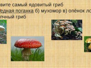 Назовите самый ядовитый гриб а)бледная поганкаб) мухомор в) опёнок ложный г