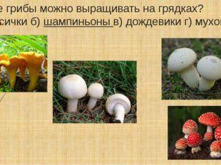 Какие грибы можно выращивать на грядках? а) лисички б)шампиньоныв) дождевик