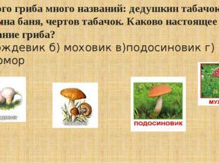 У этого гриба много названий: дедушкин табачок, галкина баня, чертов табачок.