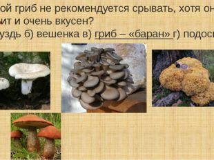. Какой гриб не рекомендуется срывать, хотя он не ядовит и очень вкусен? а) г