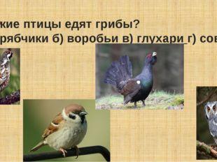 Какие птицы едят грибы? а) рябчики б) воробьи в)глухариг) совы