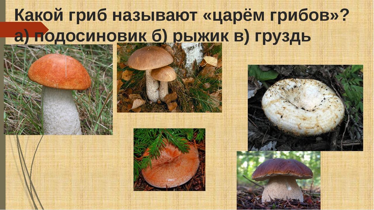 Какой гриб называют «царём грибов»? а) подосиновик б) рыжик в) груздь г)боро...