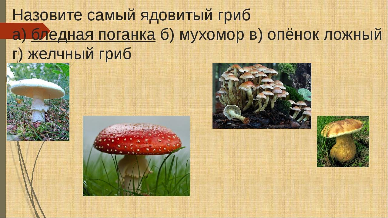 Назовите самый ядовитый гриб а)бледная поганкаб) мухомор в) опёнок ложный г...