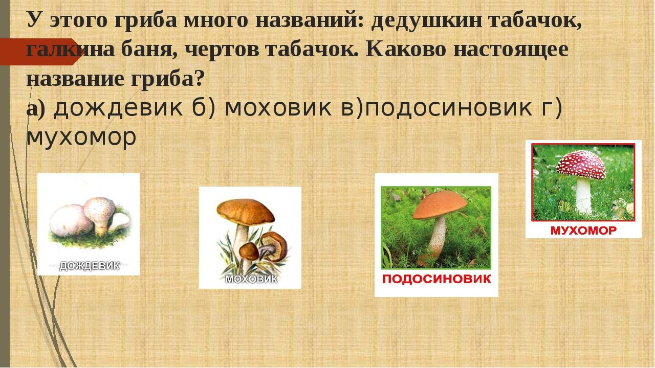 У этого гриба много названий: дедушкин табачок, галкина баня, чертов табачок....