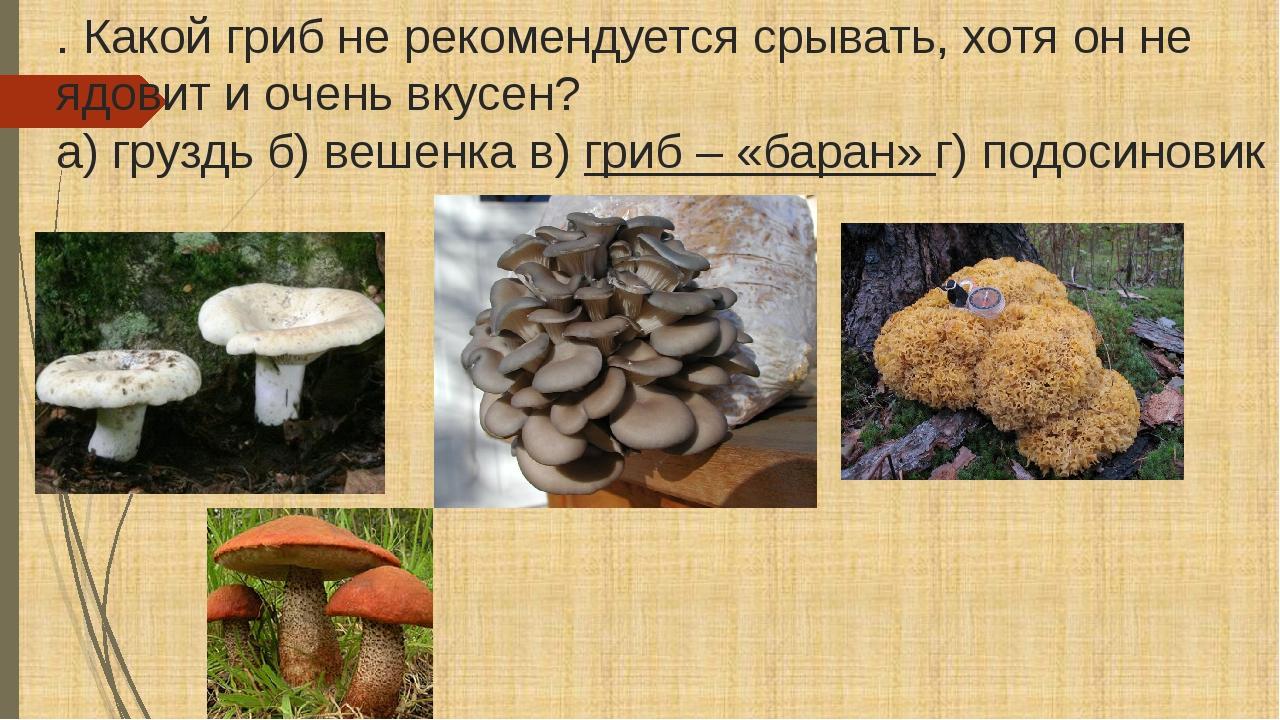 . Какой гриб не рекомендуется срывать, хотя он не ядовит и очень вкусен? а) г...