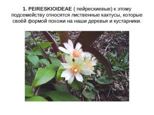 1. PEIRESKIOIDEAE ( пейрескиевые) к этому подсемейству относятся лиственные к