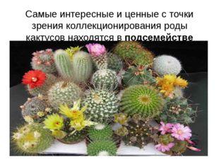 Самые интересные и ценные с точки зрения коллекционирования роды кактусов нах