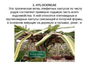 1. HYLOCEREAE Эта тропическая ветвь эпифитных кактусов по числу родов составл