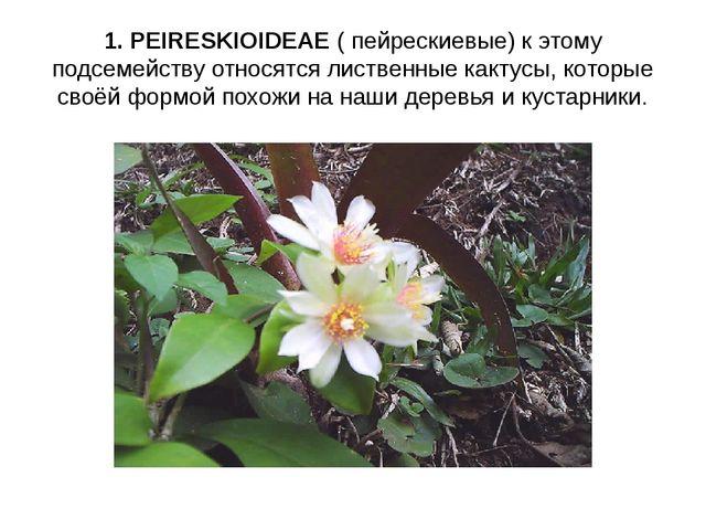 1. PEIRESKIOIDEAE ( пейрескиевые) к этому подсемейству относятся лиственные к...