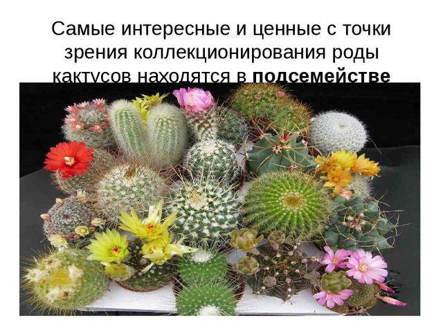Самые интересные и ценные с точки зрения коллекционирования роды кактусов нах...