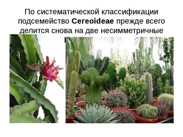 По систематической классификации подсемейство Ceгeoideae прежде всего делится...