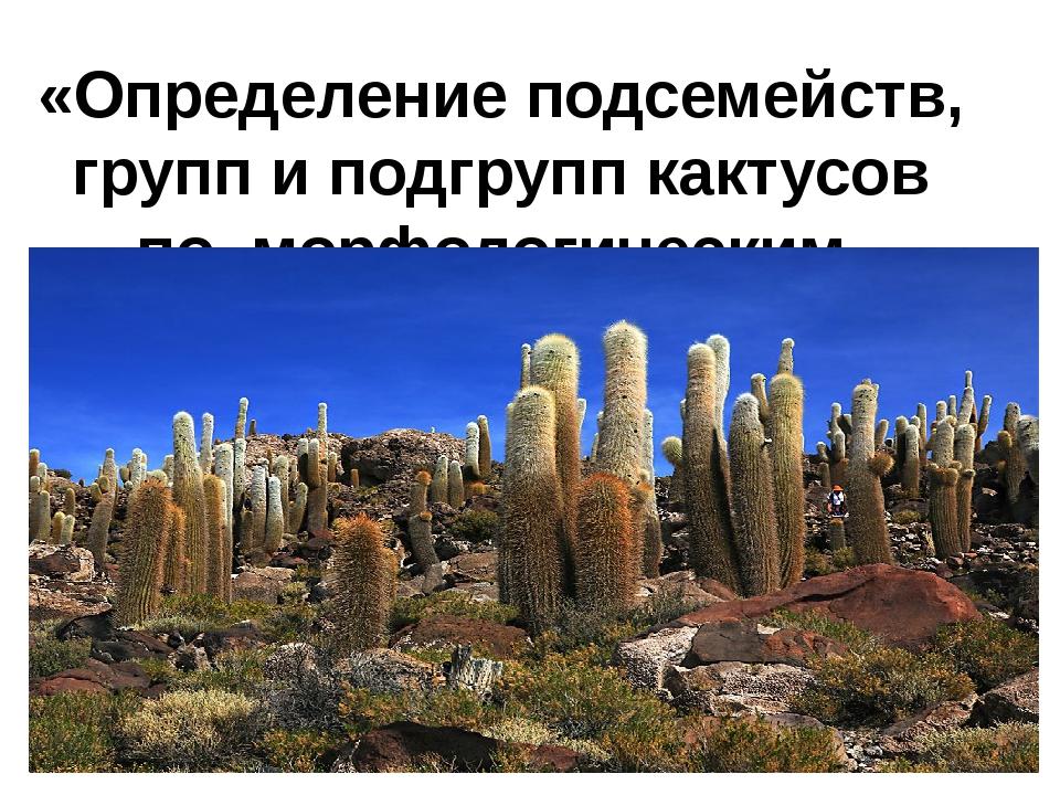 «Определение подсемейств, групп и подгрупп кактусов по морфологическим призна...