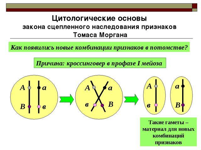 Цитологические основы закона сцепленного наследования признаков Томаса Морган...
