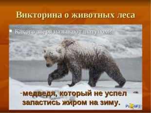 Викторина о животных леса Какого зверя называют шатуном? медведя, который не