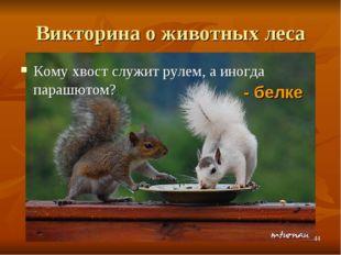 Викторина о животных леса Кому хвост служит рулем, а иногда парашютом? - белк