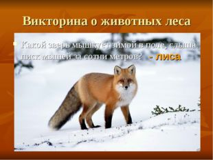 Викторина о животных леса Какой зверь мышкует зимой в поле, слыша писк мышей