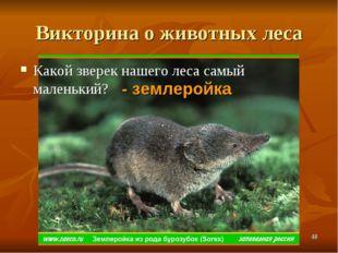Викторина о животных леса Какой зверек нашего леса самый маленький? - землеро