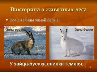 Викторина о животных леса Все ли зайцы зимой белые? У зайца-русака спинка тем