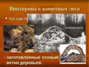 Викторина о животных леса Что едят бобры зимой? - заготовленные осенью ветки