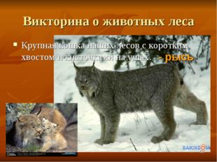 Викторина о животных леса Крупная кошка наших лесов с коротким хвостом и кист