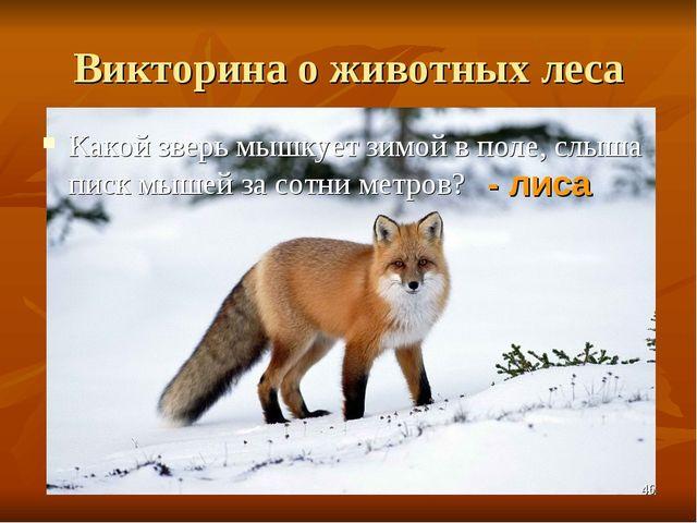 Викторина о животных леса Какой зверь мышкует зимой в поле, слыша писк мышей...