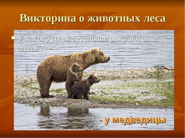 Викторина о животных леса У какого зверя детёныши рождаются зимой? - у медвед...