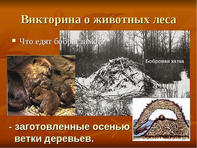 Викторина о животных леса Что едят бобры зимой? - заготовленные осенью ветки...