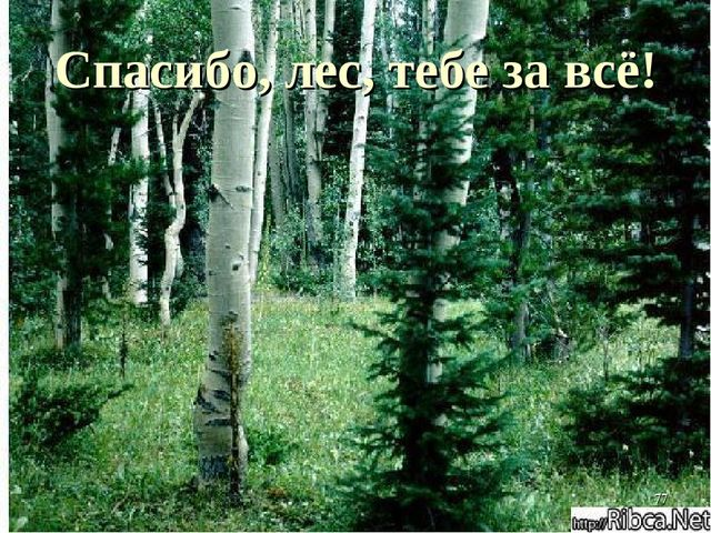 Спасибо, лес, тебе за всё! *