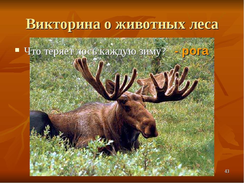 Викторина о животных леса Что теряет лось каждую зиму? - рога *