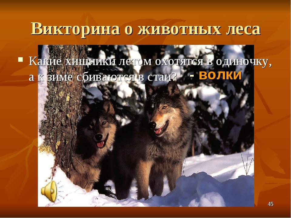 Викторина о животных леса Какие хищники летом охотятся в одиночку, а к зиме с...