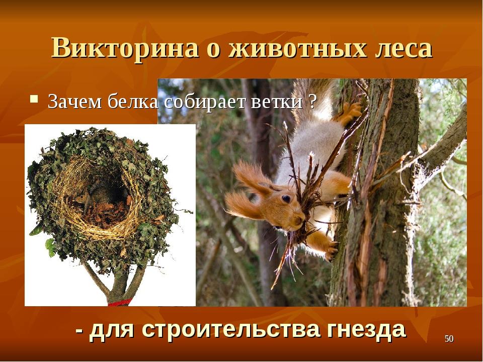 Викторина о животных леса Зачем белка собирает ветки ? - для строительства гн...