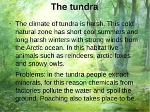 The tundra The climate of tundra is harsh. This cold natural zone has short c