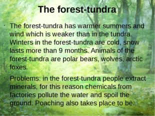 The forest-tundra The forest-tundra has warmer summers and wind which is weak