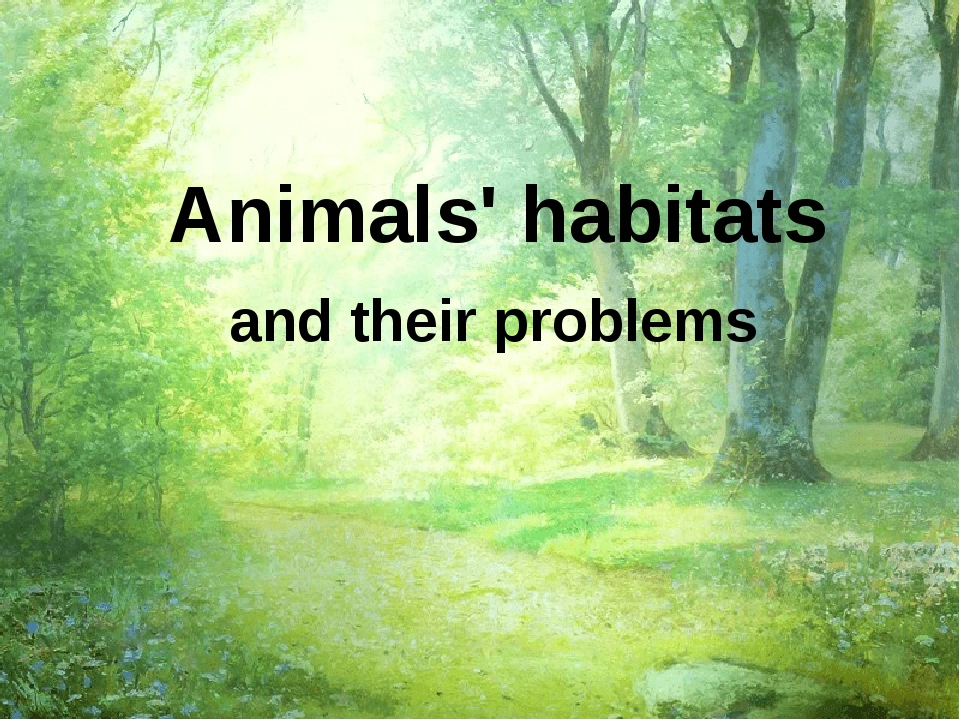 Animals' habitats and their problems