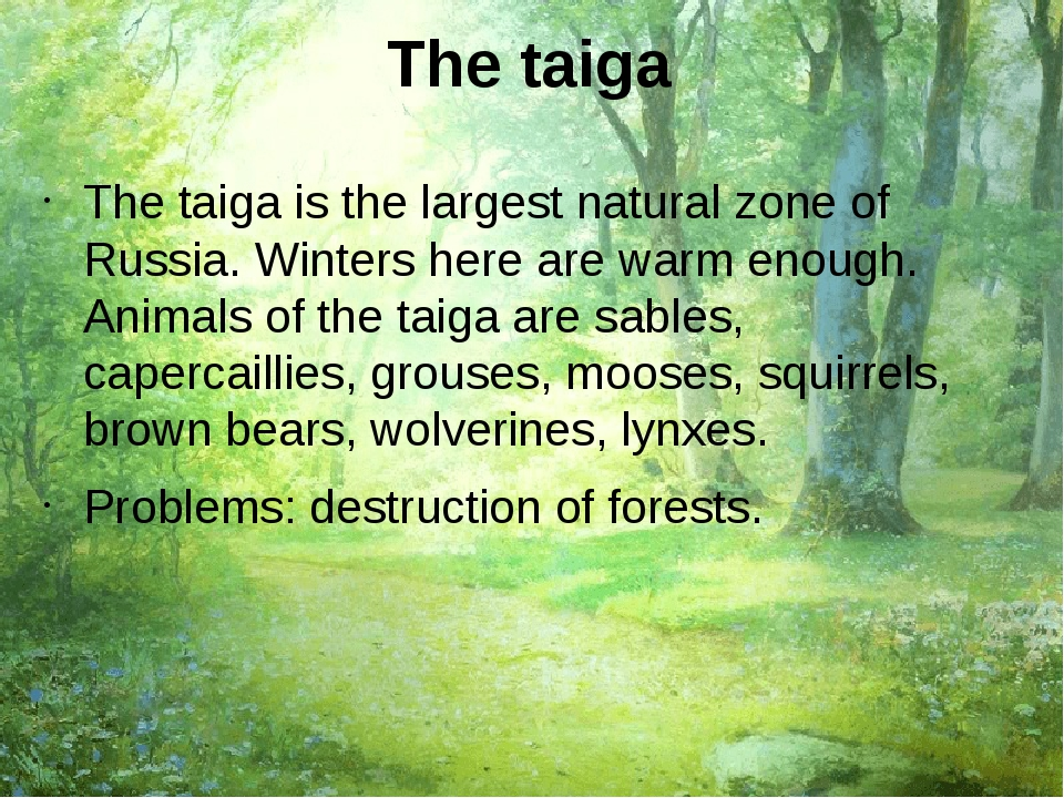 The taiga The taiga is the largest natural zone of Russia. Winters here are w...