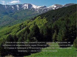 Нельзя по-настоящему оценить красоту природы Македонии, не побывав в ее нацио
