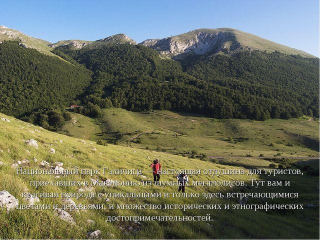 Национальный парк Галичица — настоящая отдушина для туристов, приехавших в Ма...
