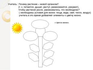 Учитель : Почему растение – живой организм?  (т. к. пита